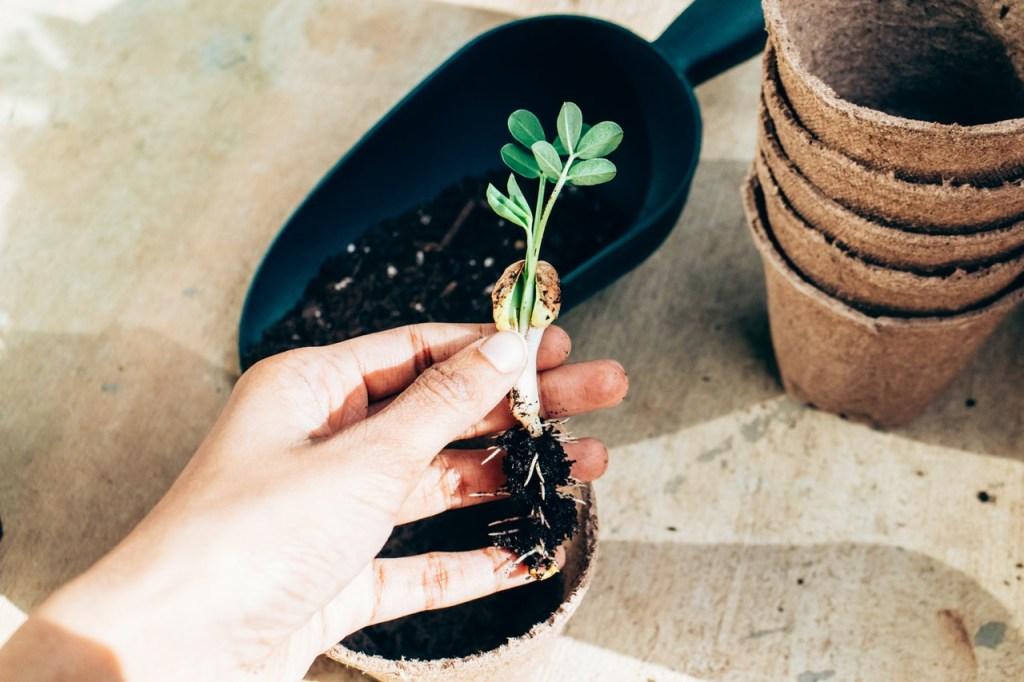 Passo a passo para preparar o solo das suas plantinhas 09 Vision Art NEWS
