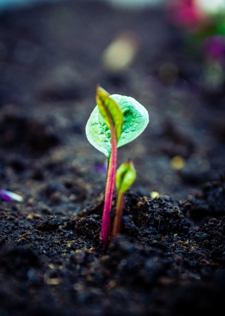 Passo a passo para preparar o solo das suas plantinhas 12 Vision Art NEWS