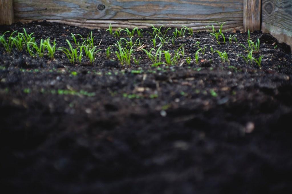 Passo a passo para preparar o solo das suas plantinhas 14 Vision Art NEWS