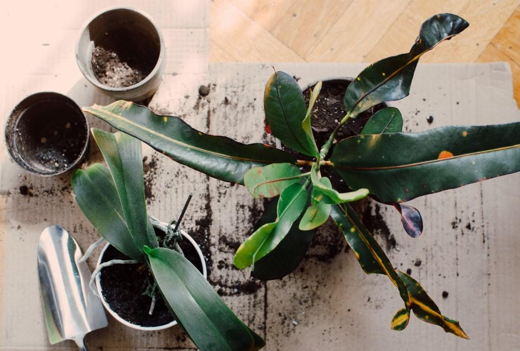 Passo a passo para preparar o solo das suas plantinhas 15 Vision Art NEWS