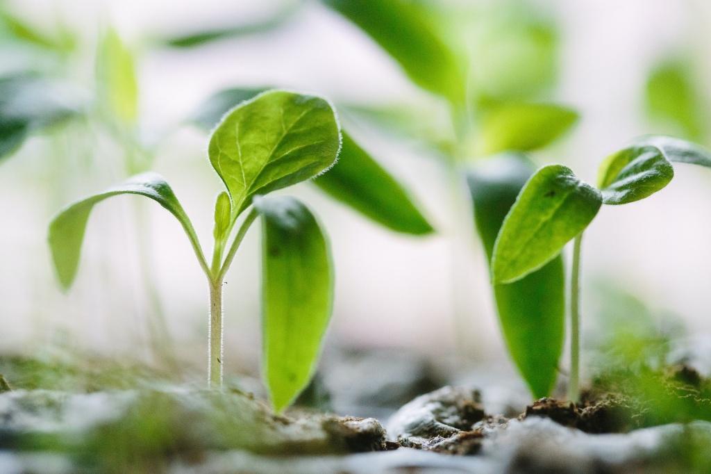 Passo a passo para preparar o solo das suas plantinhas 16 Vision Art NEWS