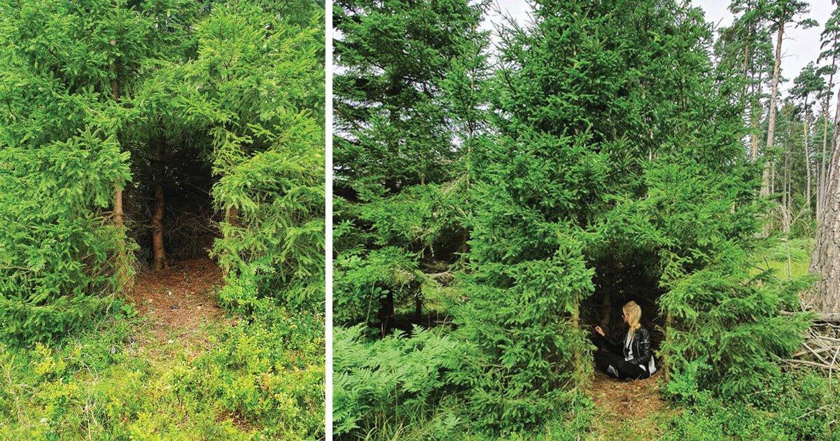"""Arquitetura raiz: veja esta cabana """"primitiva"""" construída em uma árvore"""