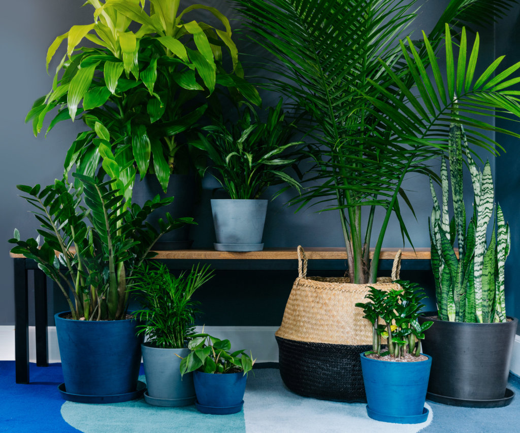 11 plantas fáceis de cuidar que precisam de pouca luz