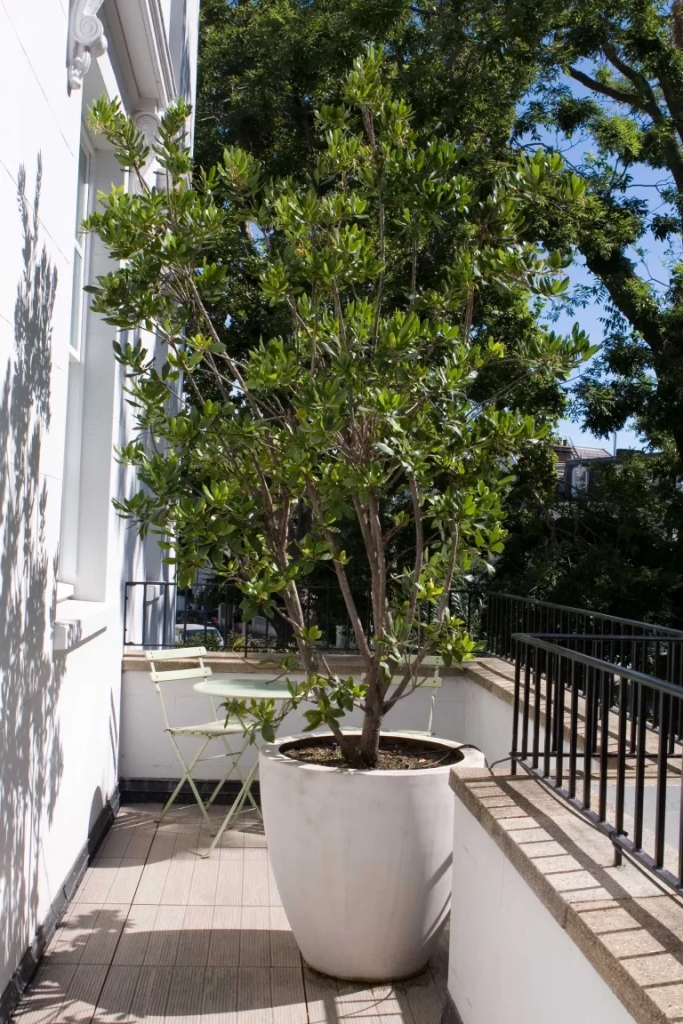 11 jeitos de criar jardins em espaços estreitos e aproveitar as laterais da casa 10 Vision Art NEWS